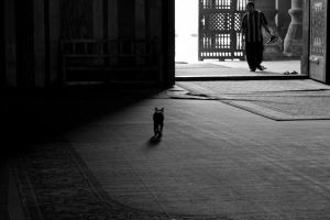 Cat in the mosque by alyhazzaa