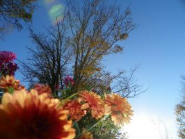 Flower's Eye View Of The World by LifeThroughALens84