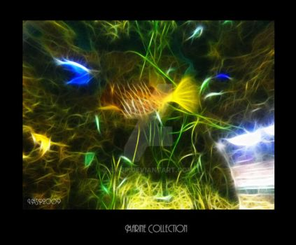 Marine Collection-2 by LMSP