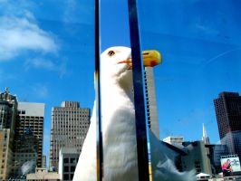 Seagull in the City by La-V