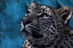starfall leopard (painting) by xecho