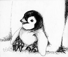 Penguin Series: Baby Emperor by penguinluv4ever