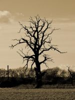 Long Dead Tree by davepphotographer