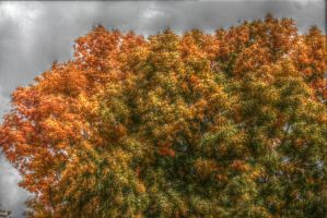 Fall HDR 2 by flowofwoe