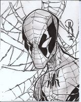 Spidey sketch card by JoeyVazquez