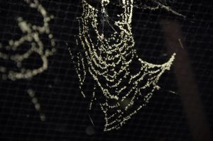 Spider Web 04 by FairieGoodMother