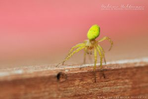 Spider - 3 by Pebels