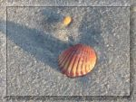Seashell on the Sand by SparrowsFlame