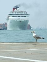 the seagul and the ship by Boolpropenacheats