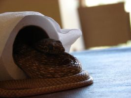 Toilet snake by E-Dowely