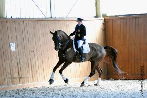 dressage competitions by revaseriee