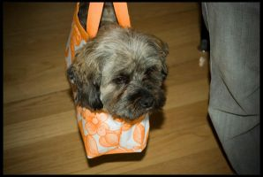 Dog in a Bag by netherl