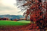 Autumn feelings no.55 by landscapesaxony