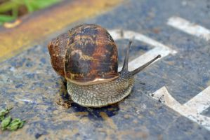 Macro Snail 3 by priwax