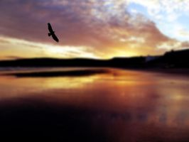 Eagle flew out of the night by friartuck40