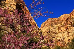 Purple Tree Canyon by Celem