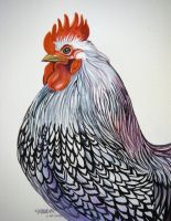 Rooster Silver Laced 4 by HouseofChabrier