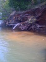 Roots in water by KMKramer44