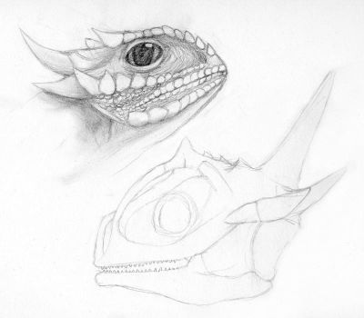 how to draw a texas horned lizard