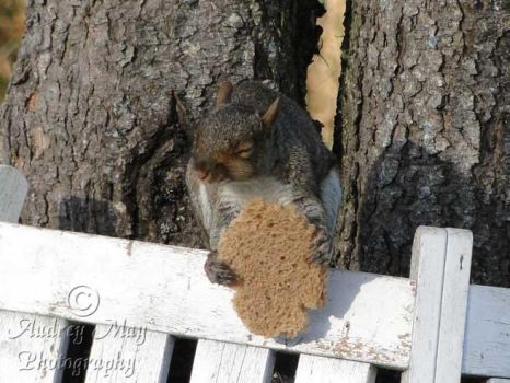 Squirrel Enjoying A Slice Of Bread by AudreyMayPhotography