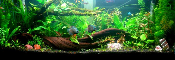 My Planted Tank 02 by vandominic