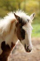 Foal Paint Horse by EliseJ-Photographie