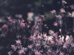 Sadness in soft pink by sunny1212