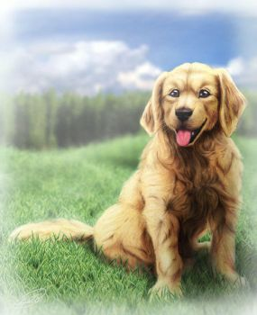 Golden Retriever : Dog Smile by SheltieWolf