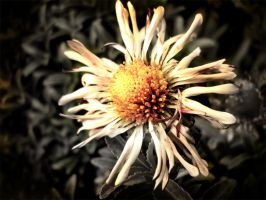 Picture 473_Flower by InfiniteCreations