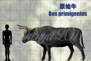 Bos primigenius by sinammonite