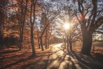 Autumn sun by Lindqvist