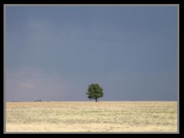 Lone Tree by amoraltale