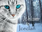 Welcome to IceClan by Wishkit