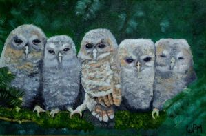 Baby Owls by WendyMitchell