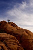 Lone Tree on Red Rock by fbcota
