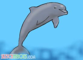 dolphin by SketchHeroes