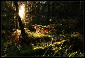 October Evening Lights.. by FlorentCourty