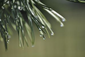 Drops of Spring by Child-of-Minerva