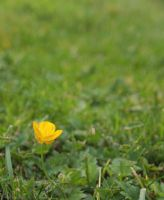 A yellow flower by Trampire