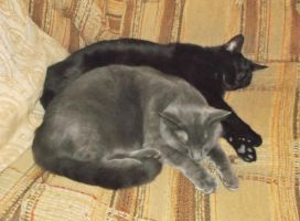 On the couch (1): Pookie and Phantom (RIP) by MystMoonstruck