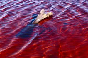 Pool of blood 2 by wildplaces