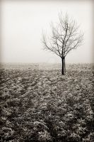 Winter in Germany 1 by Finvara