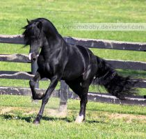 black stallion 4 by venomxbaby