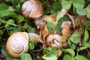 Poor snails by FaZa9