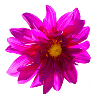 Dark Pink Flower PNG.. by Alz-Stock-and-Art