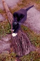Her cat and broomstick by Refielle