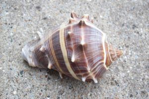 Seashell 1 by natureflowerstock