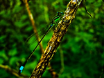 Green Dragonfly by Hunter-Arkaman