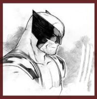 Avenger a Day - Wolverine by beastboyjoe