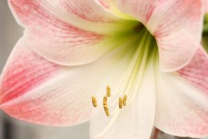 Pink and White Flower by froggynaan
